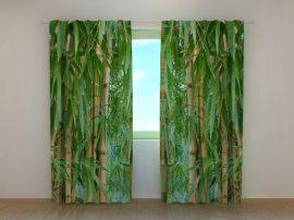 Bambusz erdő