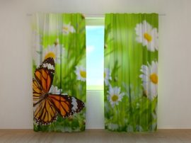 Pillangók és Kamillák