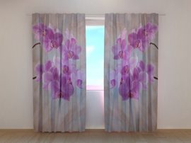 Kiolibri orchideák
