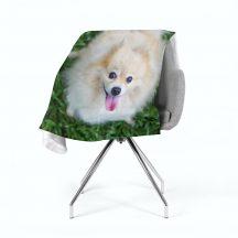 Boldog pomerániai kutya