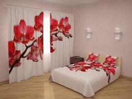 Királynő orchideák ( 35 000Ft )