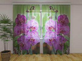 Babylon orchideák