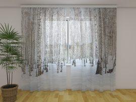 Téli nyírfa erdő