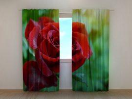 Első rózsa