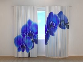 Szépséges zafírkék orchidea
