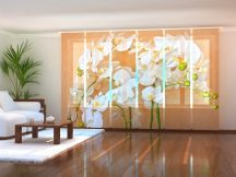 Ázsia orhideák