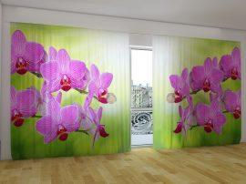 Romantikus orchideák