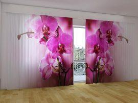 Lila orchideák 2