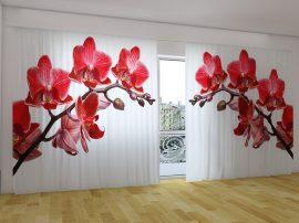 Királynő orchideák