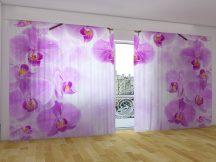 Csillag orchideák