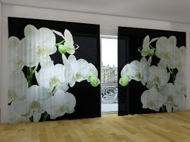 Yin Yang orchidea