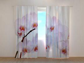 Hófehér orchideák
