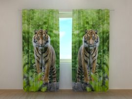 Két tigris