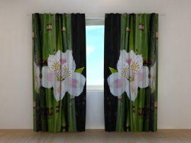 Fehér orchidea és zöld bambusz