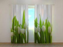 Fehér tulipánok