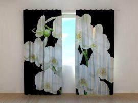 Yin Yang orchideák